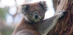 7 cosas que hay que hacer en un viaje a Australia - http://www.actualidadviajes.com/cosas-que-hay-que-hacer-en-un-viaje-a-australia/