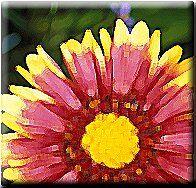 Florida's Wildflowers & Butterflies