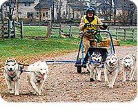 Dryland Sled Dog Races at @Lake Metroparks Farmpark (via @Lake County Ohio Visitors Bureau)