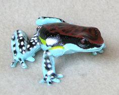 Tapir and Friends Animal Store (Realistic Stuffed Animals and Plastic Animals): Ecuadorian Poison Frog Colorful Animals, Unique Animals, Animals Beautiful, Cute Animals, Exotic Animals, Funny Frogs, Cute Frogs, Frog Pictures, Animal Pictures
