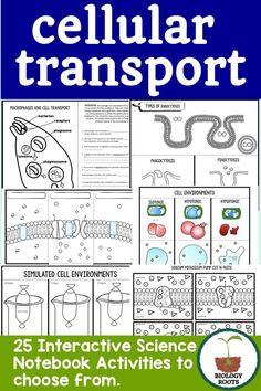 25 cell transport foldables for your biology or life science class. Endocytosis, exocytosis, hypotonic, hypertonic, diffusion plus more.