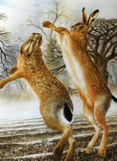 L'Assommoir Boxing Hares by Valerie Briggs