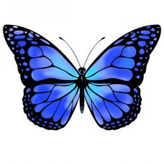 Blue Monarch Butterfly | Blue butterfly by VicksterXP   How bout a blue one Nikki.