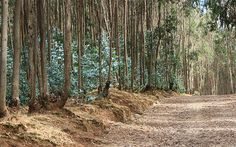 Entoto Natural Park | Entoto Natural Park, Ethiopia | Ingeborg van Leeuwen | Flickr