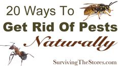 Get rid of pests without harsh chemicals - spiders, ants, mosquitos, fruit flies, & more!