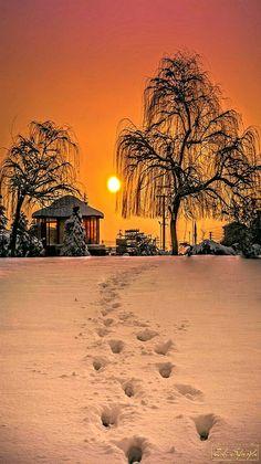 Winter - Sunset with beautiful light on the snow. -photographer Zaki Seferoglu