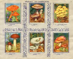 mushroom stamps in children's collectible stamp album from a French confectionery
