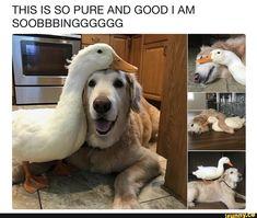 #cute, #animals, #dogs