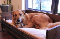 Posts about wooden dog bed frame plans written by Dog Bed Frame, Bed Frame Plans, Dog Frames, Industrial Dog Beds, Rustic Industrial, Diy Dog Bed, Diy Bed, Dog Hives, Iron Headboard