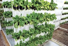 VertiCrop Takes Rooftop Farming To The Next Level(s)