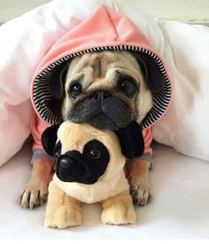 cute pug puppies Products Stunning hand crafted pug accessories and jewelery available at Paws Passion Shop! Show your pug puppy how much you love them by wearing our m Cute Baby Pugs, Cute Dogs And Puppies, Baby Dogs, Baby Animals Pictures, Cute Animal Pictures, Animals And Pets, Dog Pictures, Cute Little Animals, Cute Funny Animals