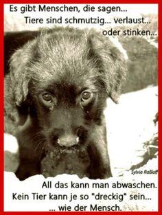 ein Bild für's Herz 'ein Hund weiss nicht .......jpg' von Edith. Eine von 279 Dateien in der Kategorie 'herzige Tierbilder' auf FUNPOT.