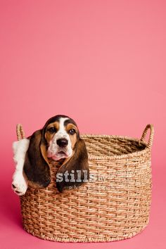 Post from the past: Welcome LuLu #puppy #dog photography