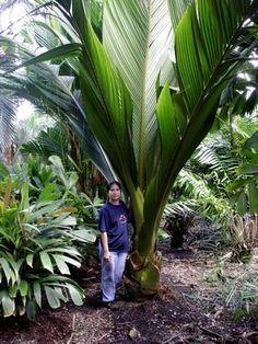Cheap Landscaping Near Me Refferal: 3782437692 Unusual Plants, Rare Plants, Exotic Plants, Cool Plants, Tropical Plants, Palm Trees Landscaping, Tropical Landscaping, Backyard Landscaping, Palm Tree Flowers