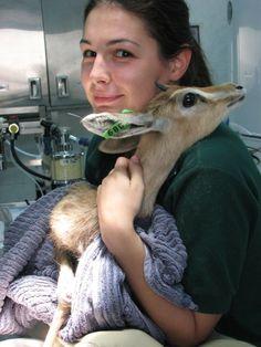 Medic veterinar în Insulele Cayman, viața ca o aventură | 24 life