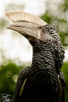 magicalnaturetour: Silver Cheeks by ~DeeOtter:) Pretty Birds, Love Birds, Beautiful Birds, Animals Beautiful, Animals And Pets, Cute Animals, Unusual Animals, Mundo Animal, Big Bird
