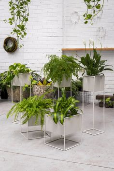 PLANTERS  140.00 Perforated planter stands in powder coated black or white     Tall:  L200 x W200 x H750mm  Short:  L300 x W300 x H350mm