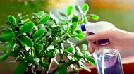 Seznam – najdu tam, co neznám Acid Loving Plants, Growing Plants Indoors, Plant Labels, New Roots, Jade Plants, Money Trees, Tree Care, Dry Leaf, Plant Needs