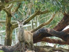 Rencontre avec un cerf en pleine balade dans le Great Ocean Wildlife Park - Carnet de. Camping CarTourRoad.