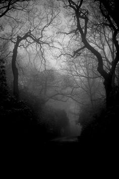 The Dark Wood