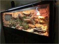 Reptile Habitat, Reptile Room, Reptile Cage, Terrarium Diy, Terrarium Reptile, Rabbit Cages, Leopard Gecko Habitat, Leopard Geckos, Turtle Aquarium