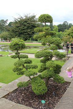 Pin japonais arbres nuages pinterest pin japonais for Acheter jardin japonais