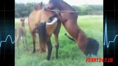 Funny Animal Mating Fail Best Momment HD