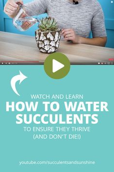 The most common reason your succulent might die, is watering problems. This video will help you know exactly how and when to water your succulents to make sure they don't die! Learn about how succulents need to be watered and why! How To Water Succulents, Types Of Succulents, Propagating Succulents, Growing Succulents, Succulent Gardening, Succulents In Containers, Succulent Terrarium, Planting Succulents, Container Gardening