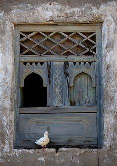 bird on an old wooden window in mirbat, oman by eric lafforgue