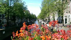 #amsterdam #europa #flowers #eurotrip Eurotrip, Otp, Amsterdam, Flowers, Ideas, Royal Icing Flowers, Thoughts, Flower, Florals