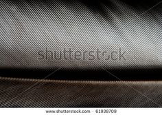 image of close up feather with... on Shutterstock