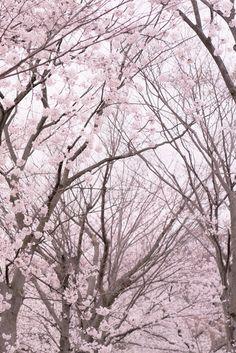 Trees #trees, #nature, https://apps.facebook.com/yangutu