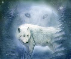 Moon Spirit 2 - White Wolf - Blue Canvas Print / Canvas Art by Carol Cavalaris Wolf Images, Wolf Photos, Wolf Pictures, Beautiful Creatures, Animals Beautiful, Cute Animals, Wolf Spirit Animal, She Wolf, Beautiful Wolves