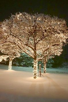 Wrapping outdoor trees with Christmas lights creates beautiful outdoor Christmas decorations using your yard's natural aesthetic. Wrapped outdoor trees are ofte