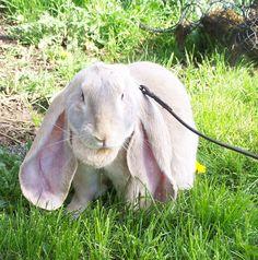 How-to-Groom-a-Rabbit.jpg