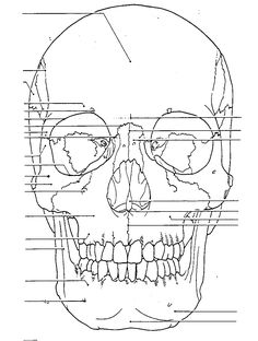 human anatomy coloring book 41 and skull coloring pages