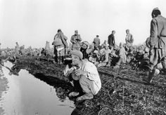 Red Army POWs at German collection point in south Russia, July 1942. The man in the foreground is drinking water from a filthy waterhole in the absence of an alternative. Disease, hunger, and exposure to the elements took their frightful toll since the Germans made no effort to provide even the basics to the throngs they captured early in the war...... Why am I not surprised?