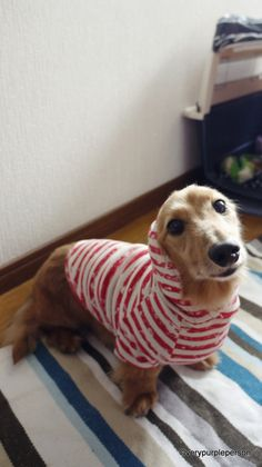 35 Dog Coat DIY's that are easy and fun and will keep your dog warm. Get the tutorials and DIY's and start making some fabulous dog coats.