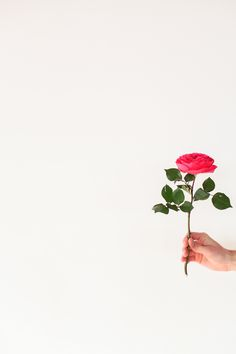 by Anna Zajac Artsy Background, Black Background Images, Flower Background Wallpaper, Leaf Background, Cute Wallpaper Backgrounds, Flower Backgrounds, Flower Wallpaper, Wallpapers, Flower Images