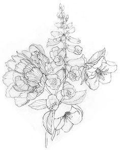 Stephanie Housley Peony drawing