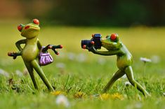 Learning photography has never been more popular than it is now. This is due to the advent of digital photography and the present easy accessibility Funny Quotes In Hindi, Famous Quotes, Funny Shit, Pie Bavarde, Photography Quotes Funny, Sapo Meme, Funny Animals, Cute Animals, Spring Quotes