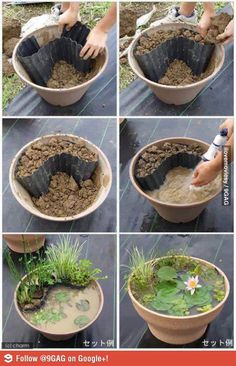 Mini pond! Would be great for habitats and ecosystems.