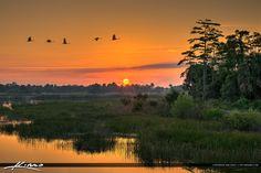 Sandhill Crane Flock in Flight at Sunrise by Kim Seng on 500px