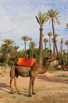 Que faire à Marrakech - Conseils et bons plans pour un long week-end de 3-4 jours - maroc