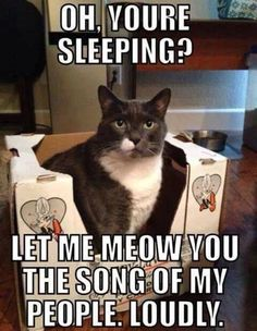 I swear animals WAIT until you are sleeping to make a ton of noise! #YoureSleeping #IWillMakeNoise