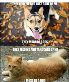 Why corgi are way better than cats!