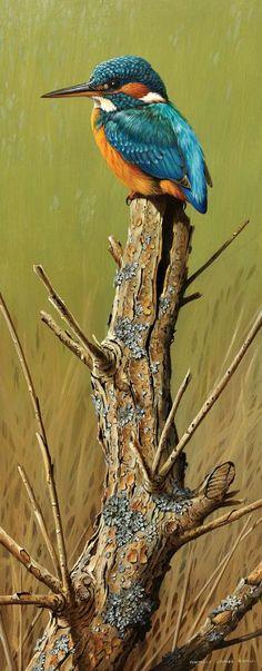 Terance James Bond 06 - My Favorite Bird (Kingfisher . Wildlife Paintings, Wildlife Art, Animal Paintings, Bird Pictures, Pictures To Paint, Bird Drawings, Animal Drawings, Horse Drawings, Kingfisher Bird