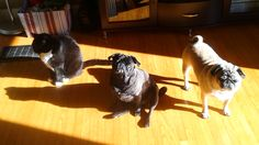 My sunbeam brings all the pets to the yard