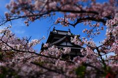 173:「桜の間から見える郡山城址をカメラ機能を使って強調してみました。」@郡山城址公園