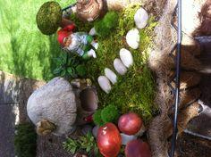 """""""Bobby's"""" Gnome Garden"""